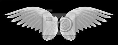 Fototapeta Białe skrzydła ptaka na czarnym tle