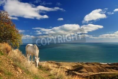 Fototapeta Biały koń w pobliżu morza