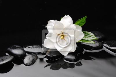 biały kwiat na czarnym tle kamieni