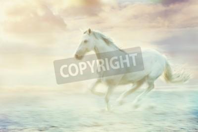 Fototapeta biały prowadzenie konia, niebo tle fantasy