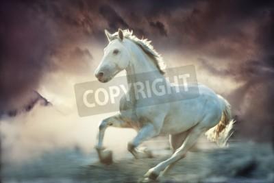 Fototapeta biały prowadzenie konia, niebo tle fantasy, mała ilość ziarna dodał