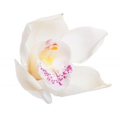 Fototapeta Biały tropikalnych storczyków
