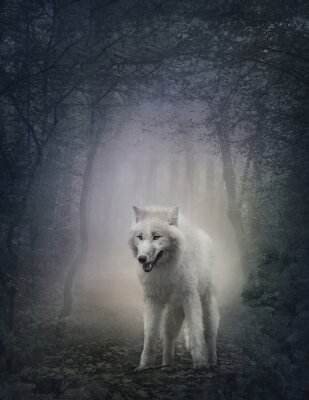 Fototapeta Biały Wilk