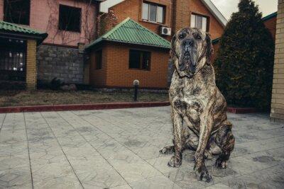 Fototapeta Big brazilian fila dog protecting the property sitting in the yard