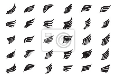 Fototapeta Big Collection of white Wings. Vector Illustration and outline Icons.