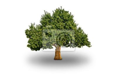 Big Tree Pojedyncze