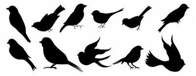Fototapeta bird silhouette vector collection set