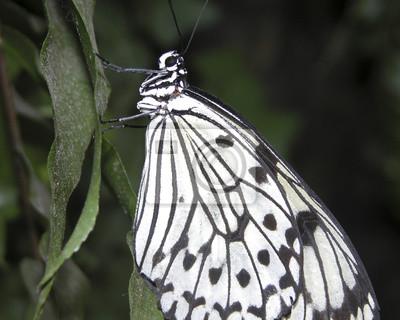leaf black and white - photo #39
