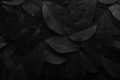 Fototapeta Black background. Background from autumn fallen leaves closeup. Black and white photo.