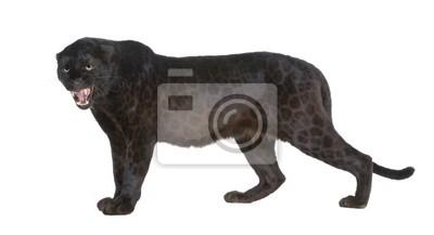 Fototapeta Black Leopard (6 lat)