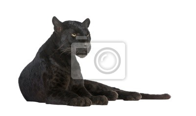 Fototapeta Black Leopard ( 6 lat )