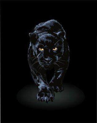 Fototapeta black panther walking toward in shadow illustration