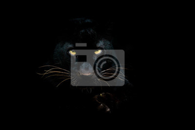 Fototapeta Black panther with a black background