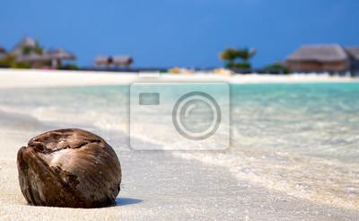 Fototapeta Bliska kokosa na plaży na Malediwach