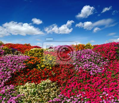 blooming flowers growing on the field