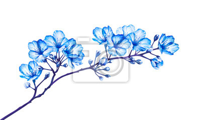 Blooming tree branch isolated on white background. Watercolor illustration.
