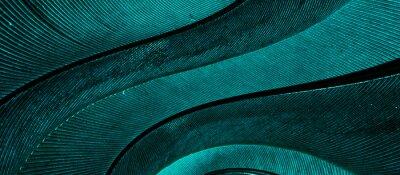 Fototapeta blue feather pigeon macro photo. texture or background
