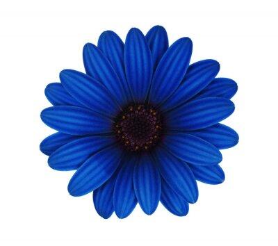 blue flower isolated on white