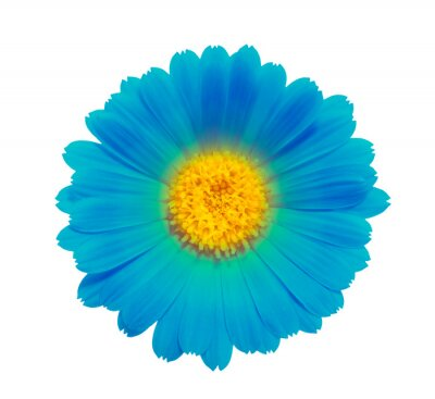 blue flower on a white