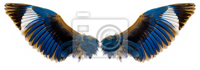 Fototapeta blue wings isolated on a white