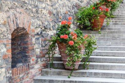 Fototapeta Blumentöpfe się alten einer Steinmauer