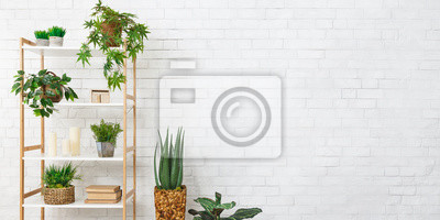 Fototapeta Bookcase with various plants over white wall
