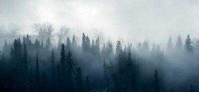 Fototapeta Borealna leśna mgła - kanadyjska leśna panorama
