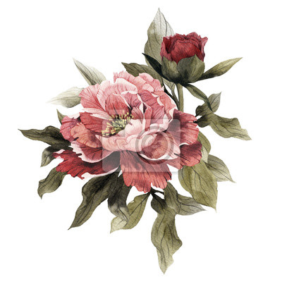 Fototapeta Bouquet of peonies, watercolor, can be used as greeting card, invitation card for wedding, birthday and other holiday and  summer background.