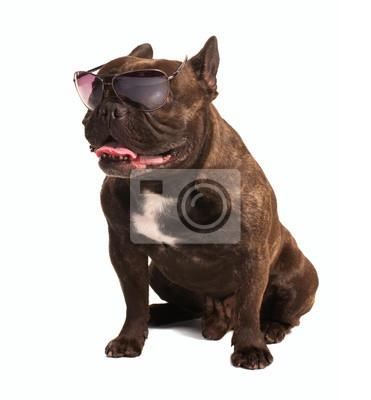 Fototapeta Brązowy Buldog Francuski W Okularach Na Wymiar Tło