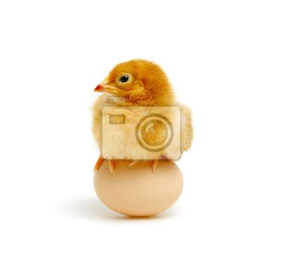brązowy jajko i kurczak odizolowywający na bielu