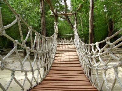 Fototapeta BridgeWskaźnik liny zawieszenia i lasy dla Jungle Adventure