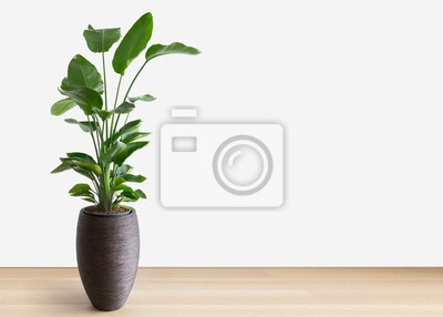 Fototapeta bright living room with a large house plant, copy space, room for text