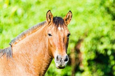 Fototapeta Brown Konie jedzenie w słońcu