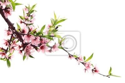 Brzoskwiniowy kwiat wiosny
