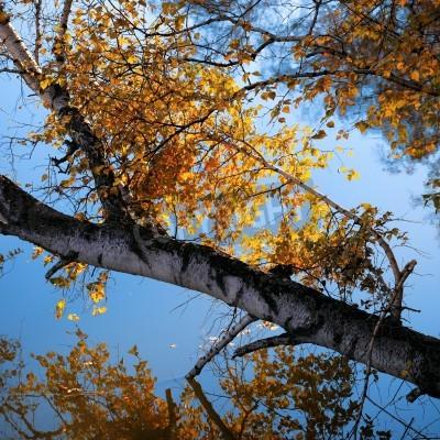 Fototapeta brzoza drzewa i gałęzi na jeziorze jesienią, piękne naturalne krajobrazy