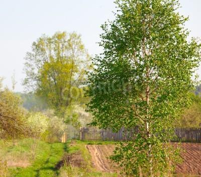 Fototapeta Brzoza drzewo na zaoranym polu na wiosnę