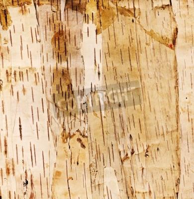 Fototapeta brzozowej kory drzewa tle. Wysoka rozdzielczość skanowania.
