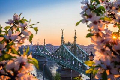 Fototapeta Budapeszt, W? Gry - Beautiful Liberty Bridge na wschód s? O? Ca z wi? Niowy kwiat i rano s? O? Ce. Wiosna przybyła do Budapesztu.