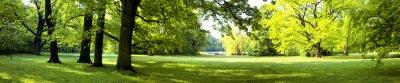 Fototapeta Bujny las jako uosobienie odzyskania siły oraz zdrowia chorego