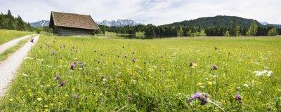 Fototapeta Bunte Frühlingswiese mit Blumen w Bawarii