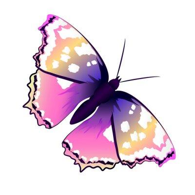 Fototapeta butterflies design