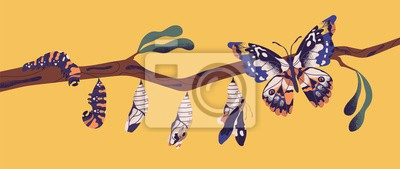 Fototapeta Butterfly life cycle - caterpillar, larva, pupa, imago eclosion. Stages of metamorphosis, growth and transformation process of winged insect on tree branch. Flat cartoon colorful vector illustration.