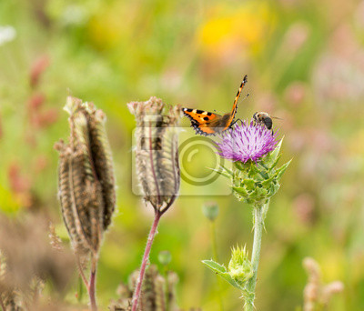 Butterfly na kwiat w lecie