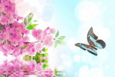 Fototapeta Butterfly on a blooming branch of sakura