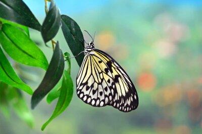 Fototapeta Butterfly World