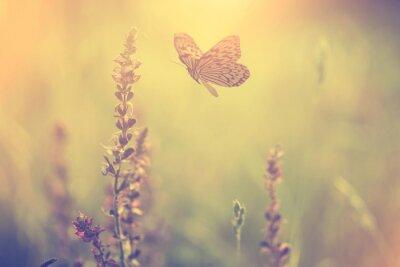 Fototapeta Butterlfy i kwiat