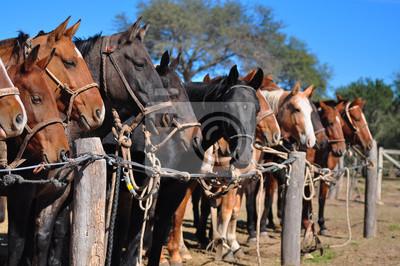 Fototapeta caballos parados en fila