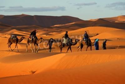 Fototapeta Camel caravan going through the sand dunes in desert