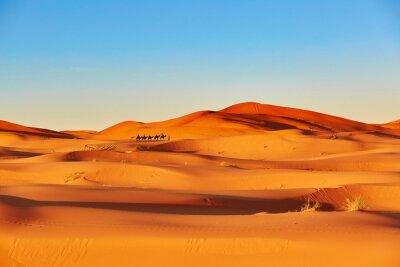 Fototapeta Camel caravan in Sahara desert