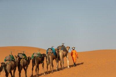 Camel caravan in Sahara desert , Morocco